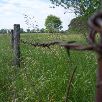 Rusty barbed wire fence (Minnesota).