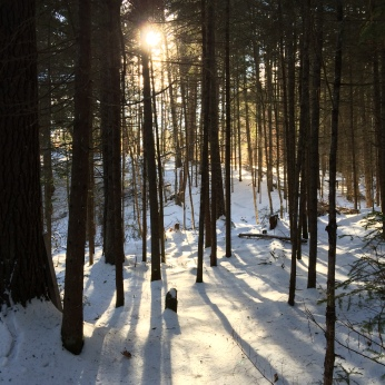 Morning woods (Vermont).